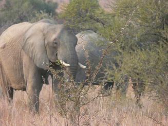 Camperreis Zuid Afrika (15 dagen): van Kaapstad naar Kaapstad
