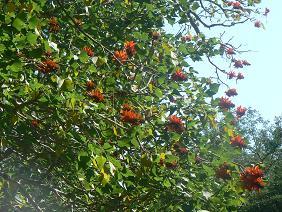 Bloemen Zuid Afrika natuur
