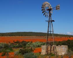 Zuid Afrika Natuur Namaqua