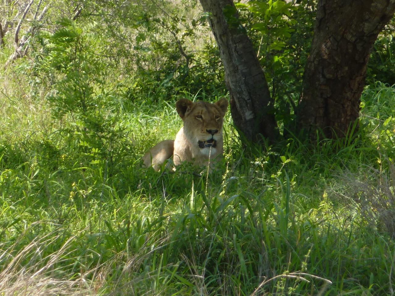 Rondreis Zuidelijk Afrika kampeer reis