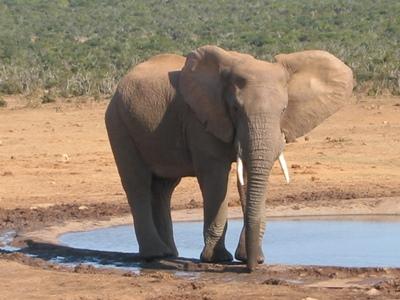 Individuele gezinsrondreis Zuid Afrika: Kaapstad, Kust en Olifanten