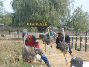 Rondreis Zuid Afrika Struisvogel farm