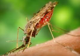 Malaria vrij op safari in Zuid Afrika