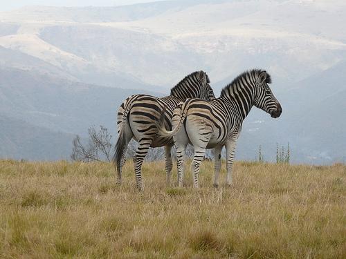 Individuele rondreis Zuid Afrika: Wilde Geheimen