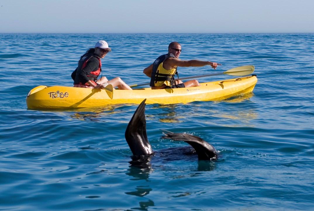 Kayakken tussen de walvissen