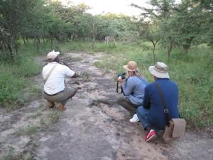 Kruger Park bush safari - kopie