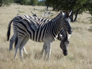 Zuidelijk Afrika 4
