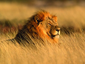 groepsreizen Zuid afrika 2016