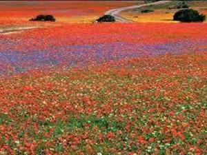 National Parken Zuid Afrika - Marakele NP