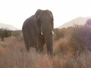 wildpark zuid afrika Addo Elephant